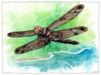 Dragonfly Notes - Original Music and Musical Art by Bart Castle